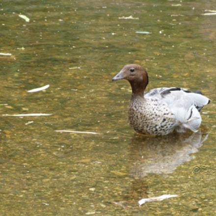 Bird Refletion in Shallow Waters