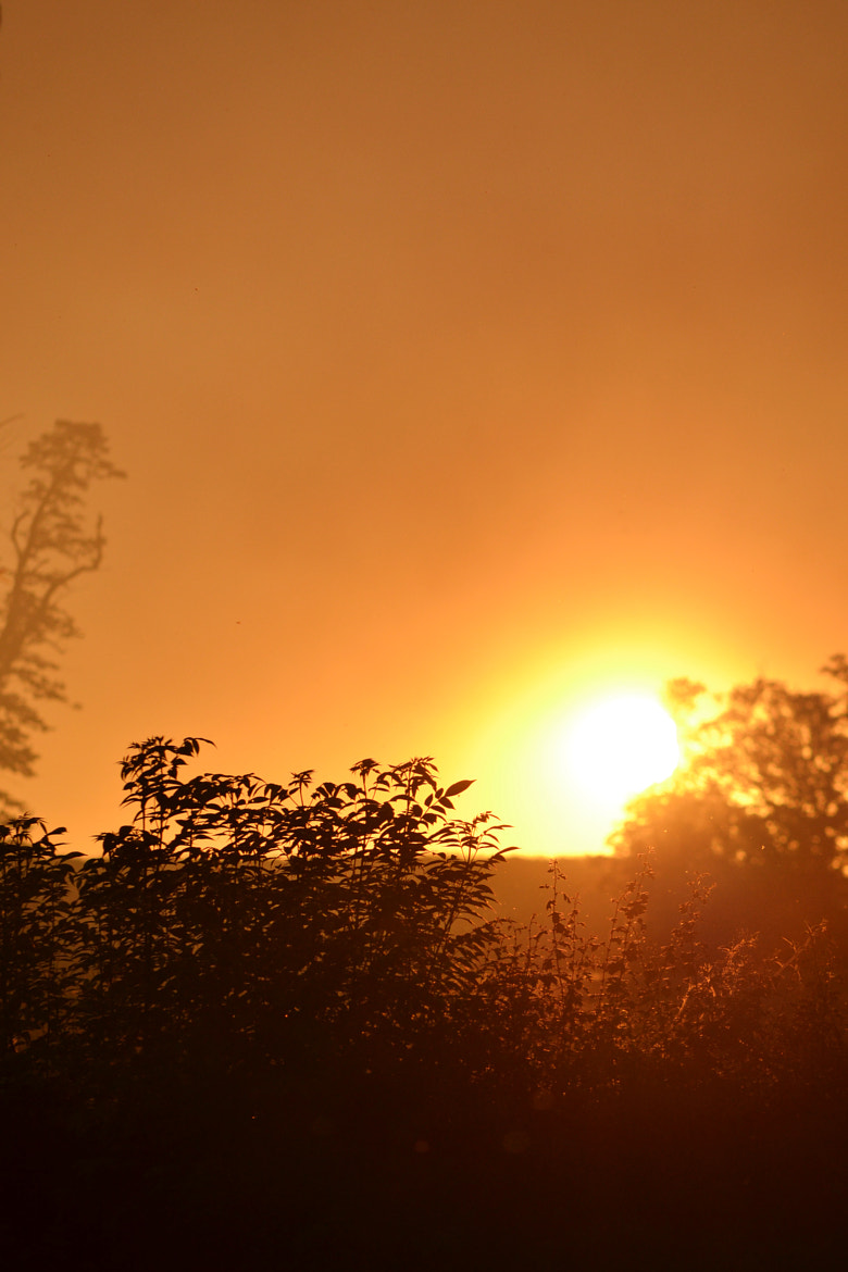 Photograph smokey sun down by emily prouse on 500px