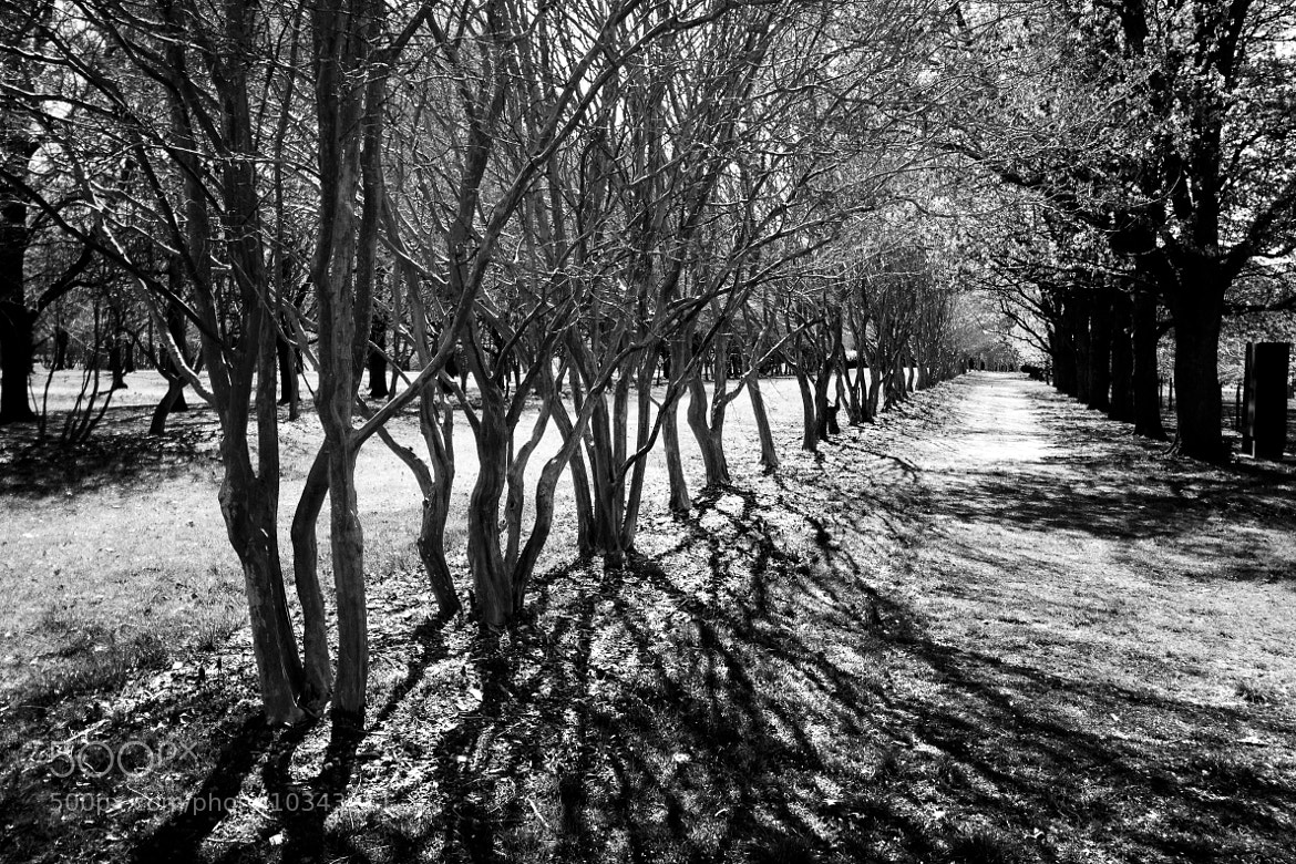 Photograph Tree Shadows by Jennifer Lycke on 500px