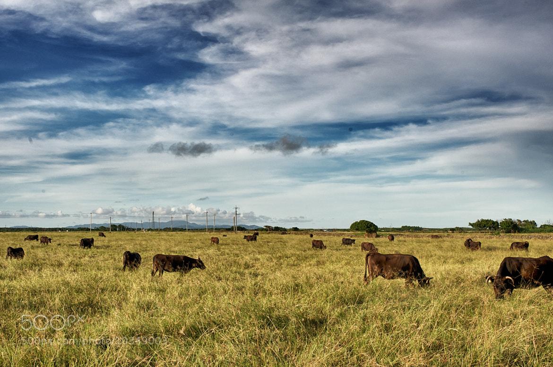 Photograph Kuroshima, Field by Alon Takeuchi on 500px