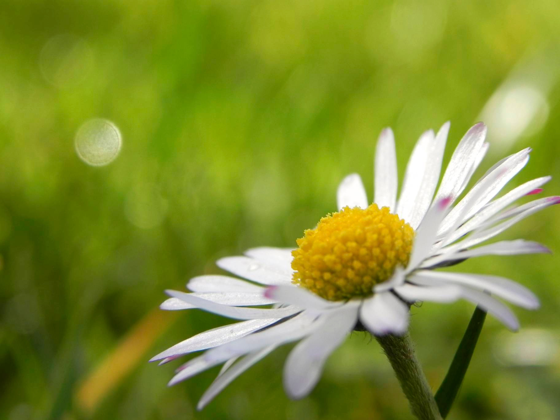 Photograph Daisy by Ruben Schmalenberg on 500px