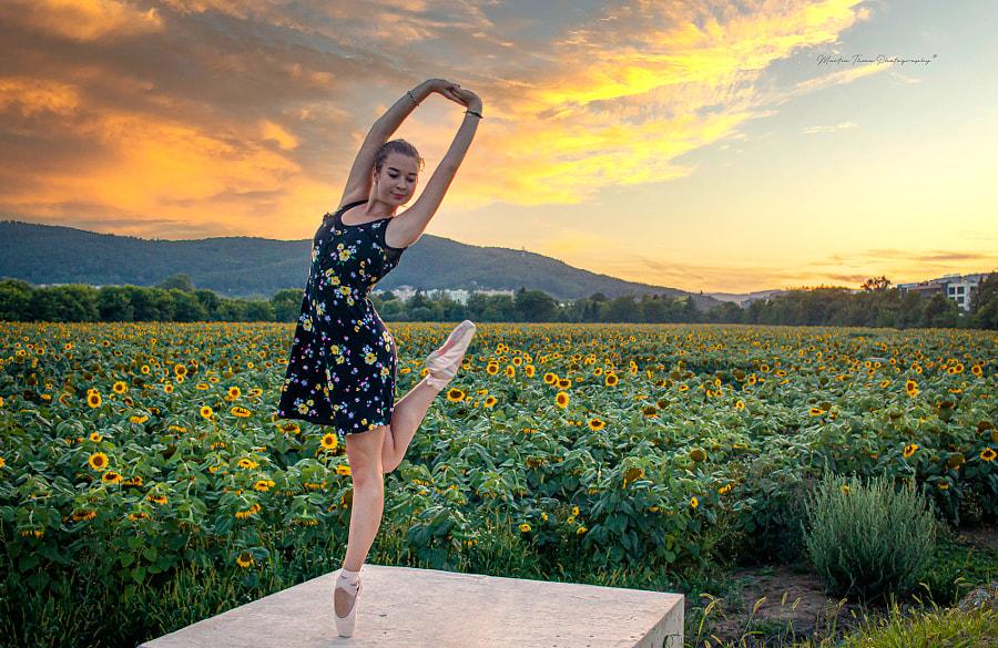 Sunflower by Martin Tůma on 500px.com