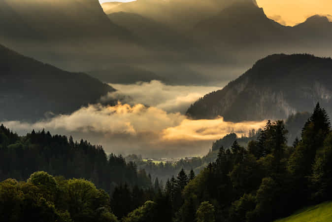 good morning by andy dauer