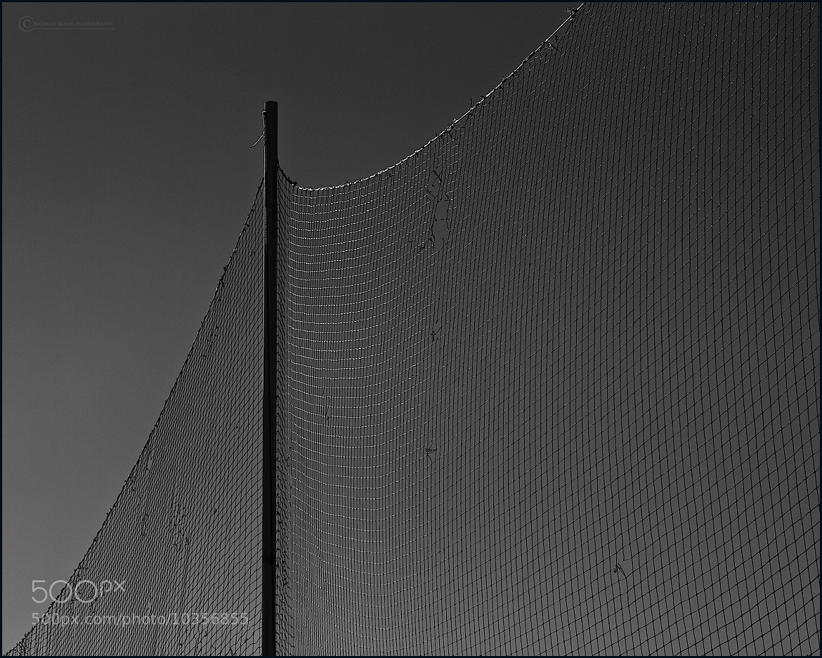Photograph Cricket by Richard Bland on 500px