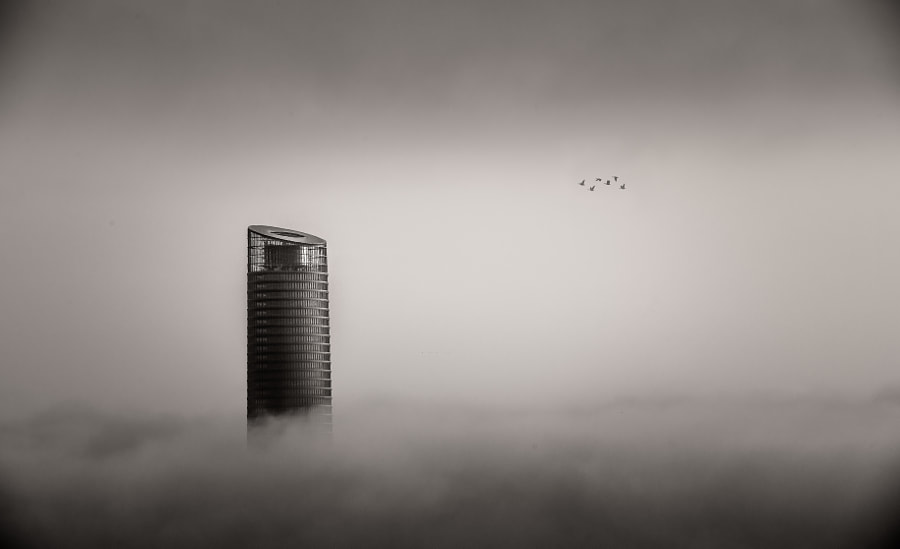 Ducks, Fog and Tower