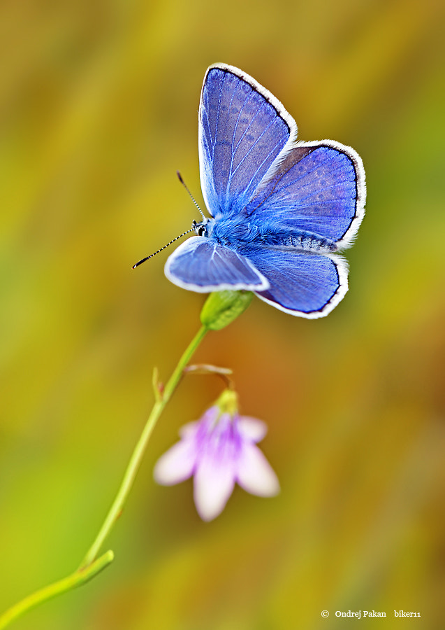 Photograph Blue by Ondrej Pakan on 500px