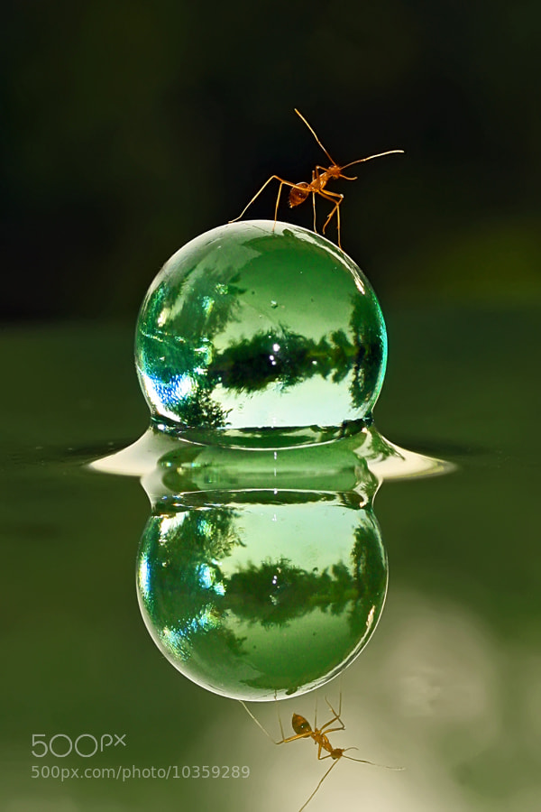 Photograph Ant & World by teguh santosa on 500px