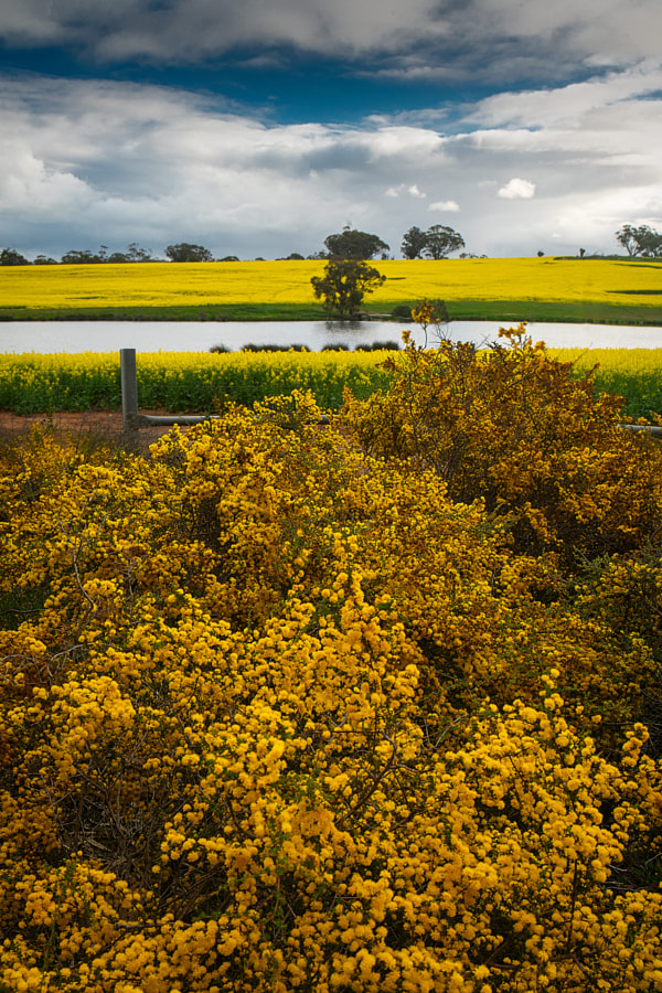 Yellow by Paul Amyes on 500px.com