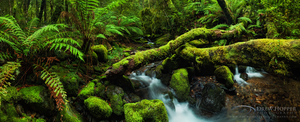 Photograph Enchanted Wilderness by Drew Hopper on 500px