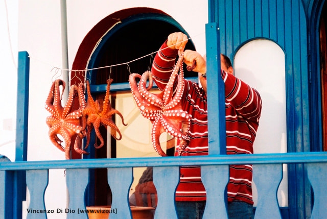 Photograph Santorini, i polpi - The octopus by Vincenzo Di Dio on 500px