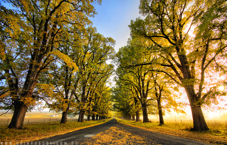 Photograph Autumn Road by Cain Pascoe on 500px