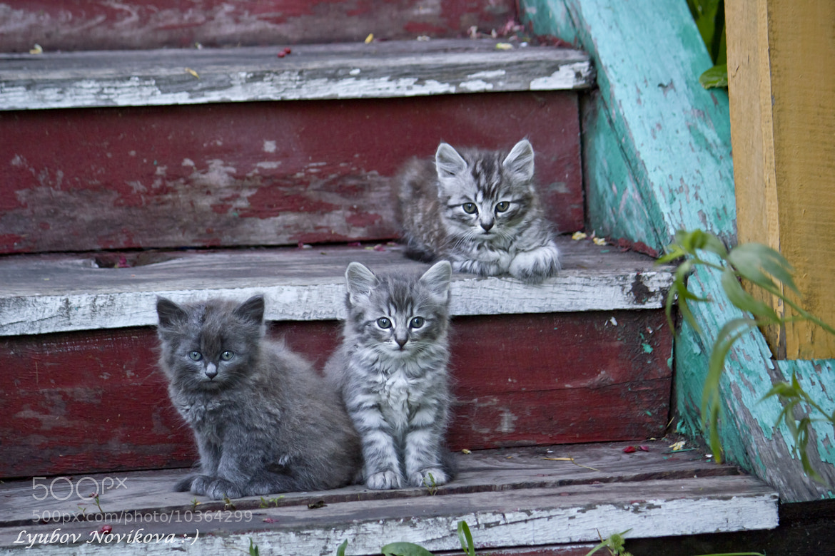 Photograph Village kittens. by Lyubov Novikova on 500px