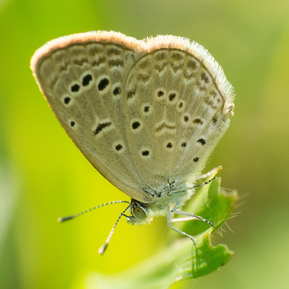 Photograph Day butterfly  by Chaiyong Kokanutaporn on 500px