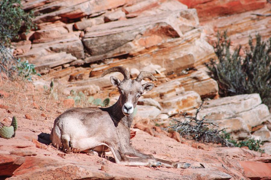 Zoin National Park, Utah