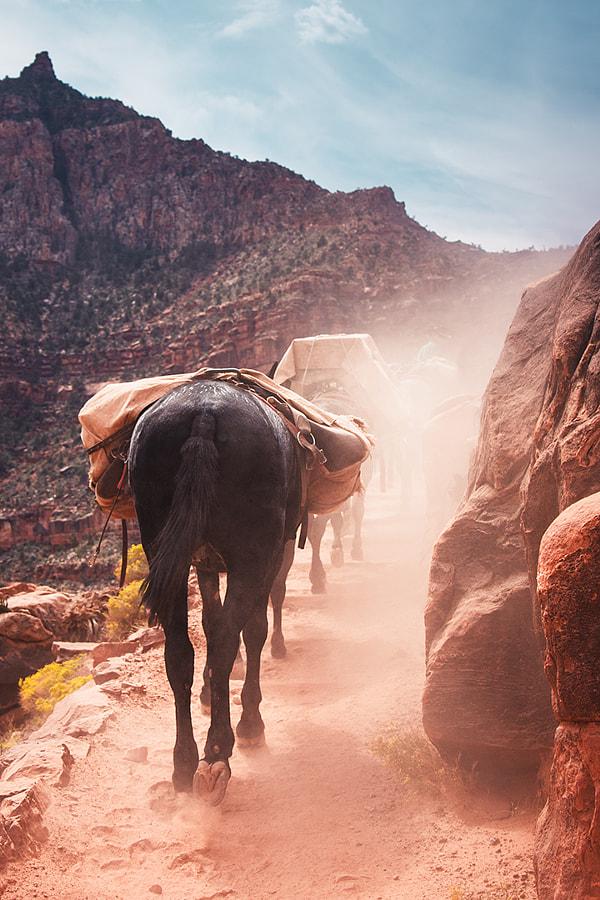 Grand Canyon National Park. Arizona