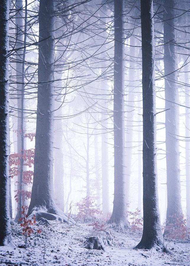 Ukraine, Carpathian Mountains