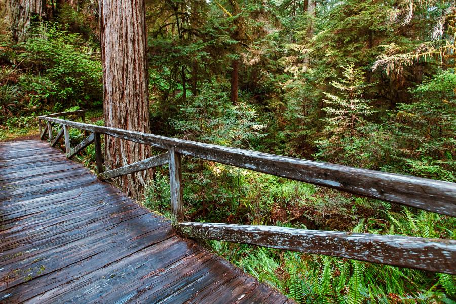 Redwood National Park. Califotnia