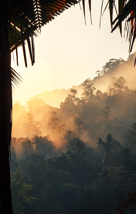 Sinharaja Forest. Ski Lanka