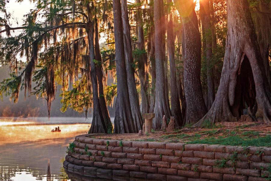 Caddo Lake State Park. Texas