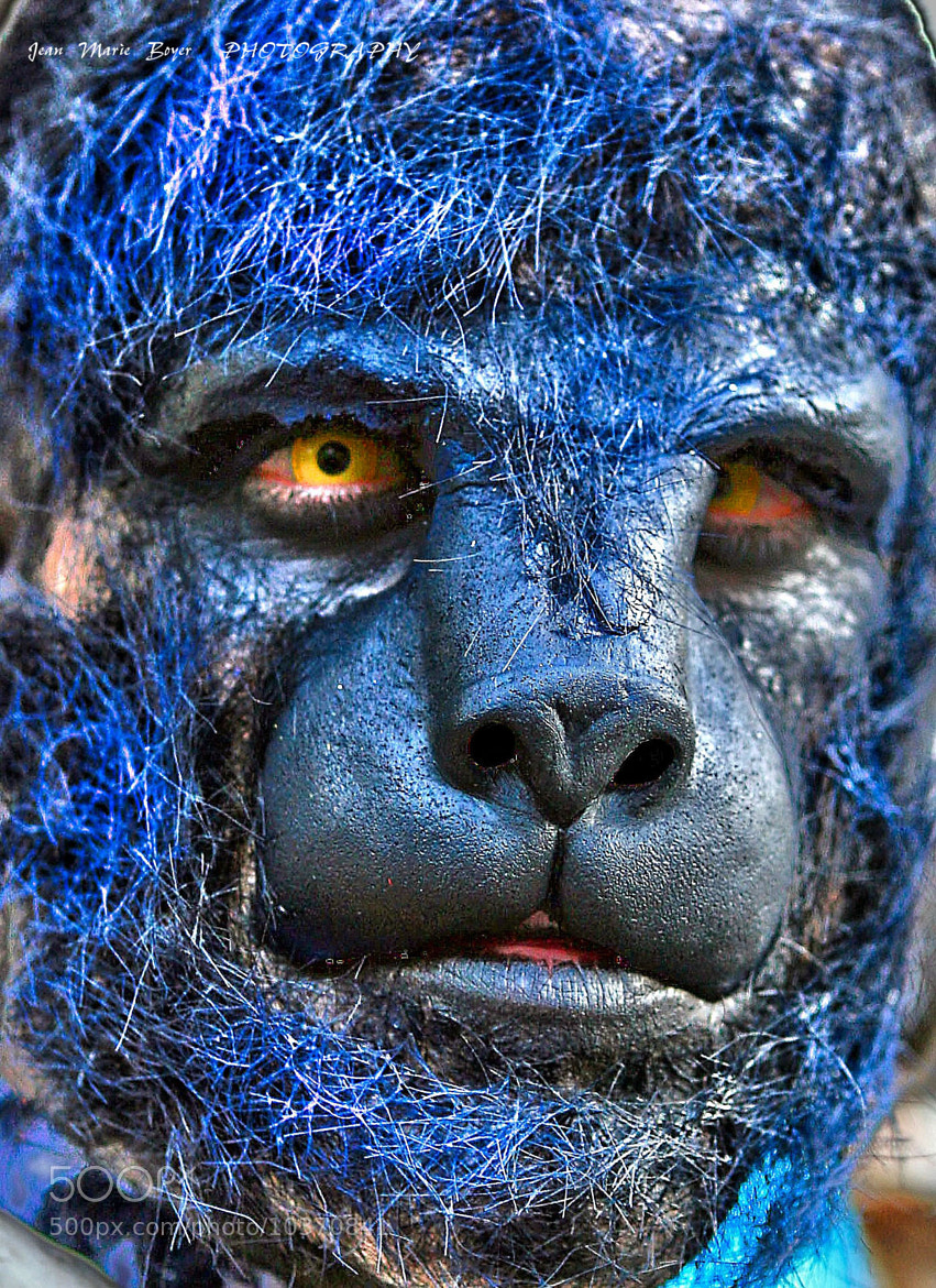 Photograph Lobo by Boyer Jean marie on 500px