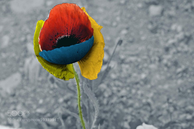 Photograph Flordesck by Eduardo Robles on 500px