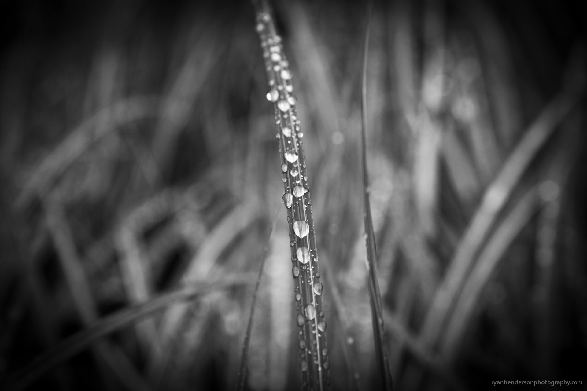 Photograph After a Rain by Ryan Henderson on 500px