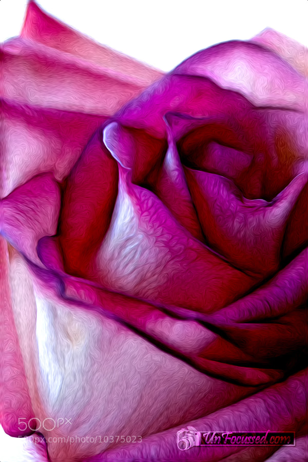 Photograph Pinked Rose Details by Bill Tiepelman on 500px
