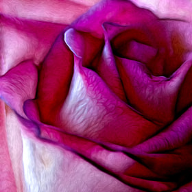 Pinked Rose Details by Bill Tiepelman (oddballz)) on 500px.com