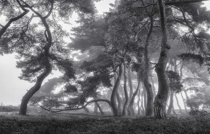 Old trees by Tiger Seo