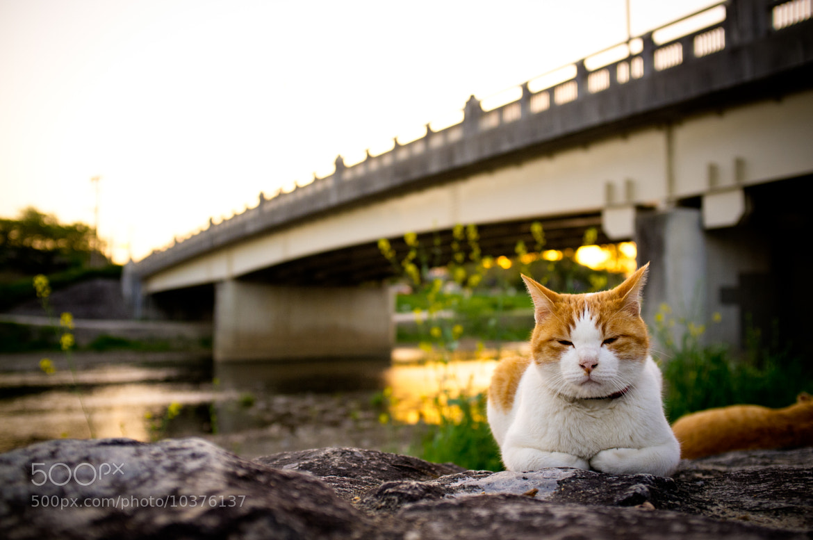 Photograph wild cat by the river by Marser  on 500px