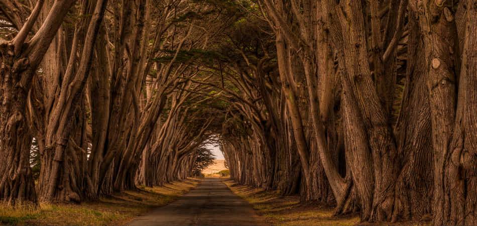 Path Forward by NicholasL