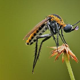 kenapa nyamuk suka hisap darah manusia