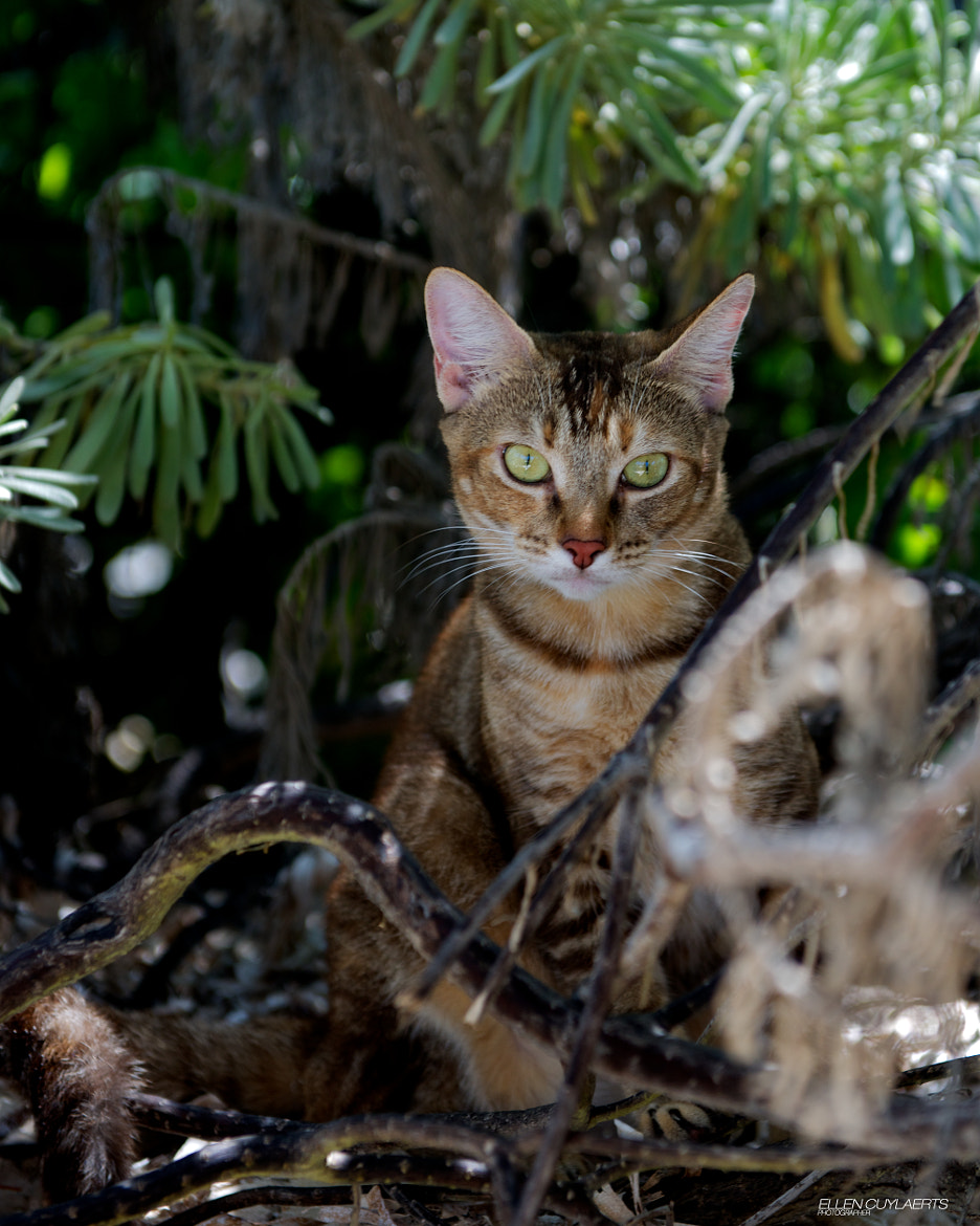 Photograph Cayenne in tha jungle by Ellen Cuylaerts on 500px