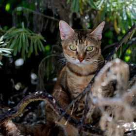 Cayenne in tha jungle by Ellen Cuylaerts (EllenCuylaerts)) on 500px.com