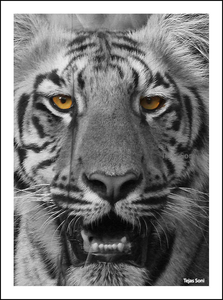 Photograph Tiger cub by Tejas Soni on 500px
