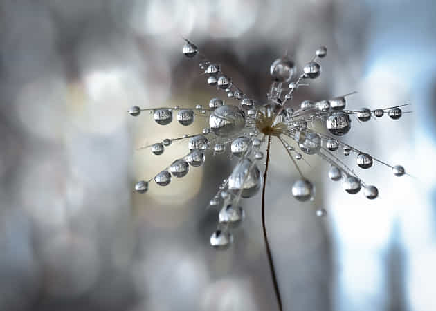 Hidden in the drops... by Anya