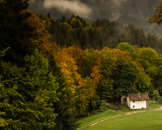 autumn by andy dauer