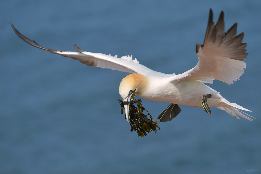Photograph nesting material    by Elmar Weiss on 500px
