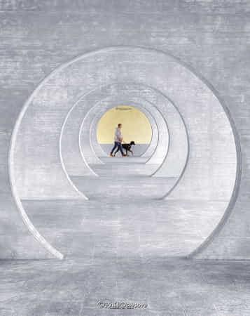 Dog walk by Phil Davson