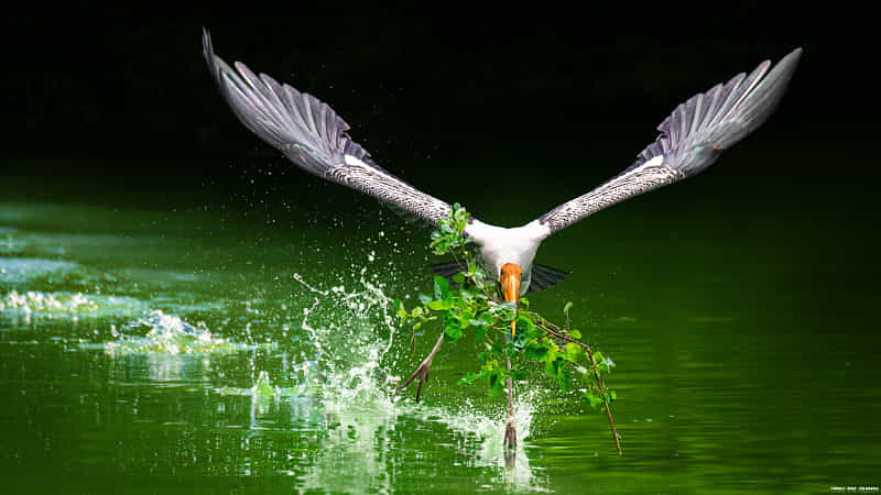 Stork One Airborne! by Sunil
