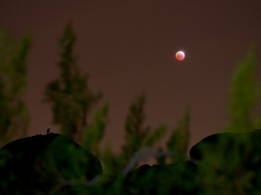 Photograph Blood Moon and the photographer by Bryan Dudak on 500px