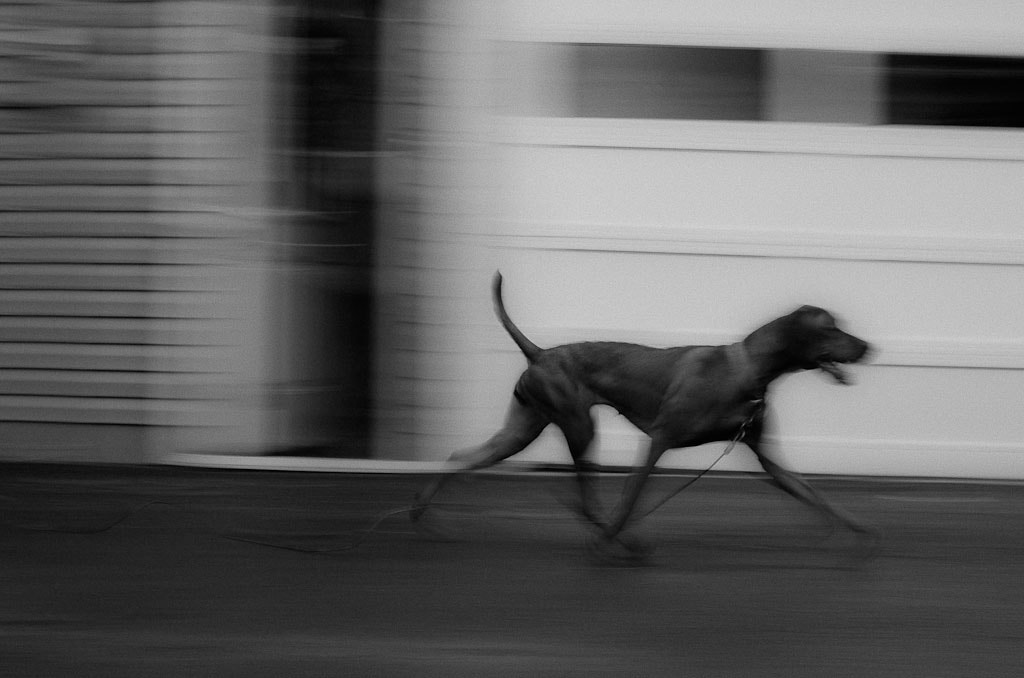 Photograph Cali Passing by Brian Posten on 500px