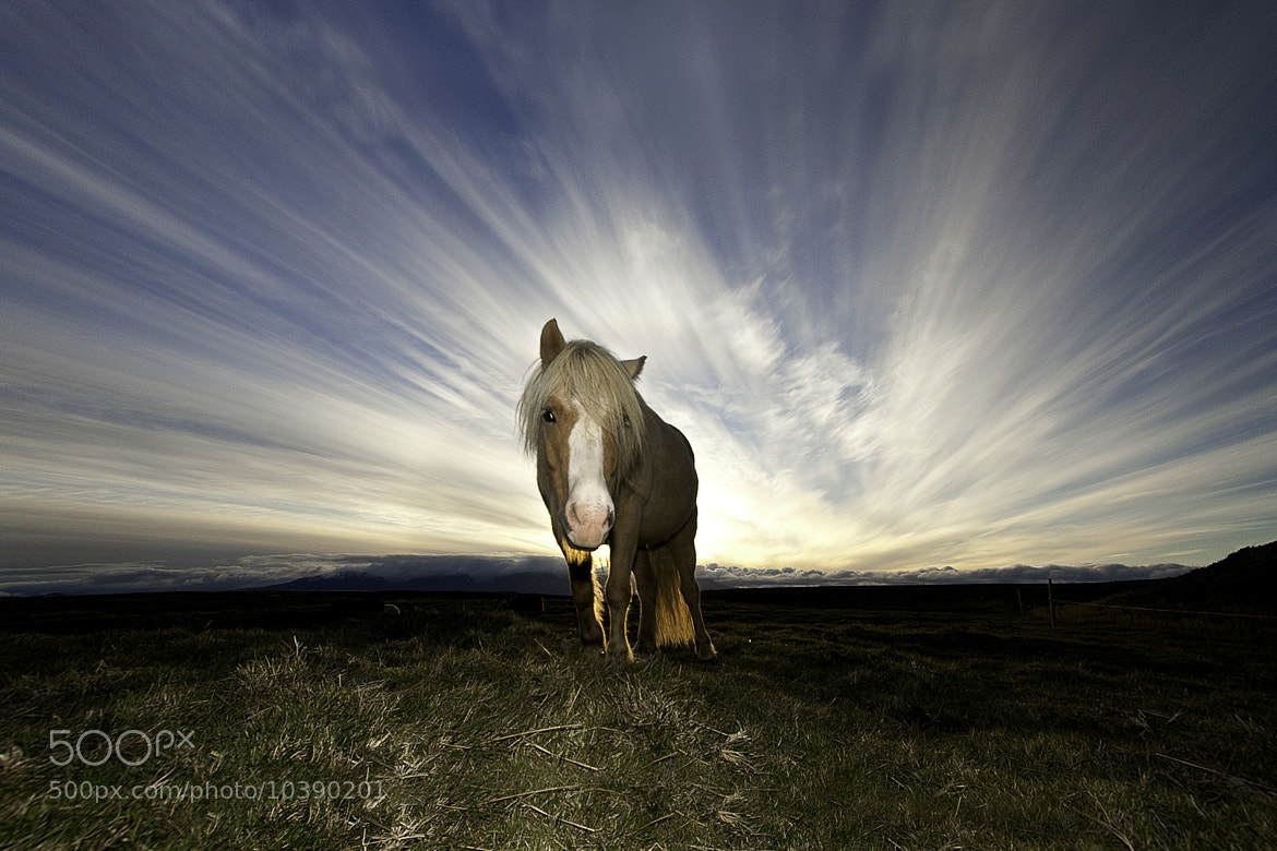 Photograph Horse in the sunset by Jon Hilmarsson on 500px