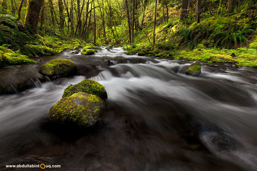 Photograph Into the stream by Abdulla Bin Touq on 500px