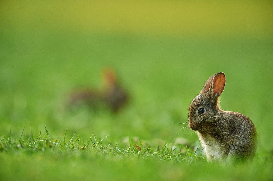 Photograph Oh no, where are the Easter eggs? by Stefan Rosengarten on 500px
