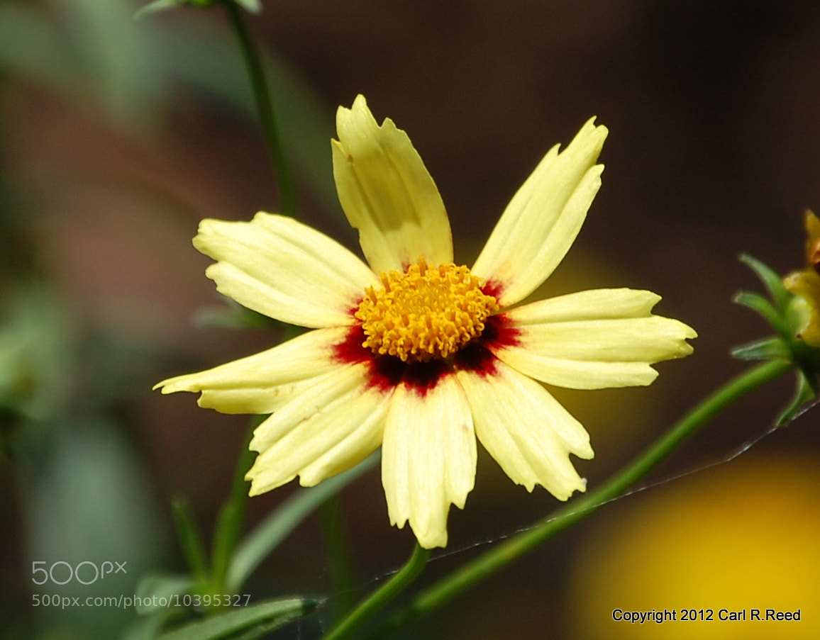 Photograph flower 127 by Carl Reed on 500px