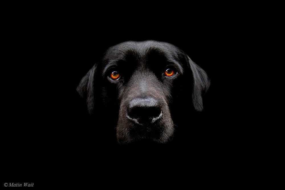 Photograph Max by Martin Wait on 500px
