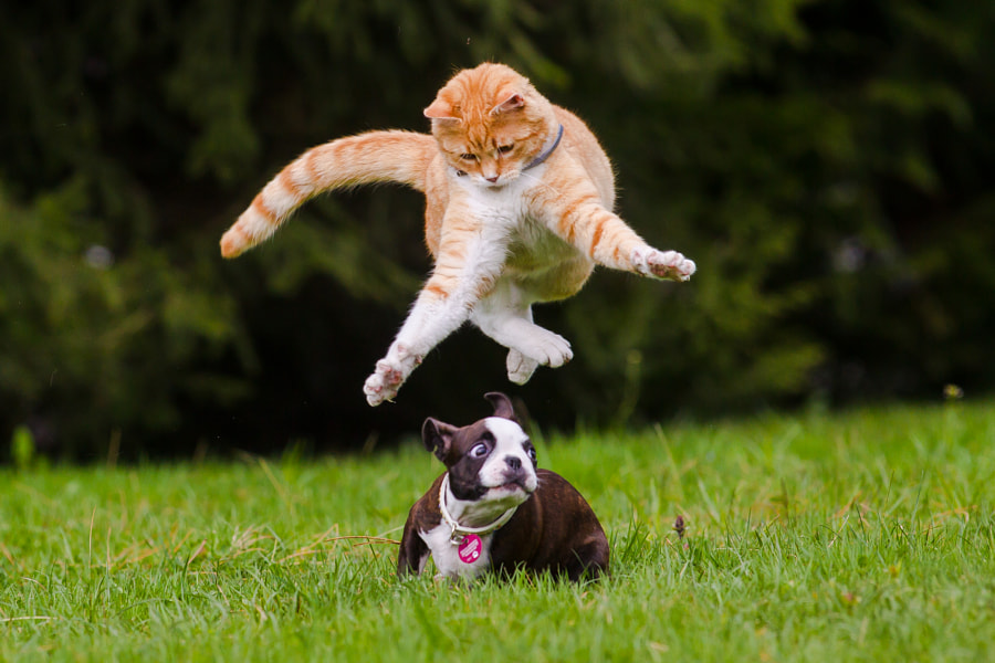 500px.comのPhilipp Steurerさんによるcats and dogs