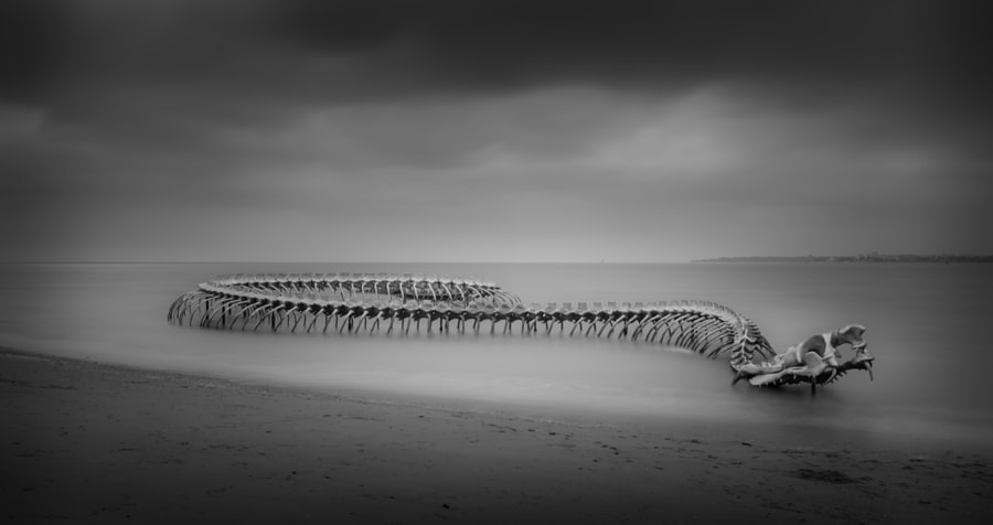 Snake Skeleton by Loïc VINCENT on 500px.com