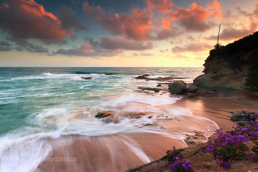 Treasure Island Laguna Beach, CA
